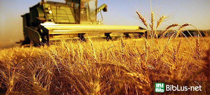 IMU terreni agricoli, le FAQ del Dipartimento delle Finanze